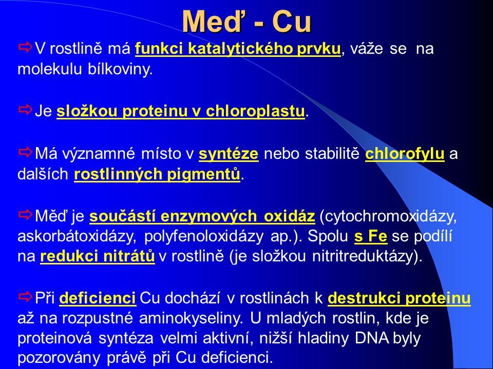 Meď - Cu  V rostlině má funkci katalytického prvku, váže se na molekulu bílkoviny.  Je složkou proteinu v chloroplastu.  Má významné místo v syntéz
