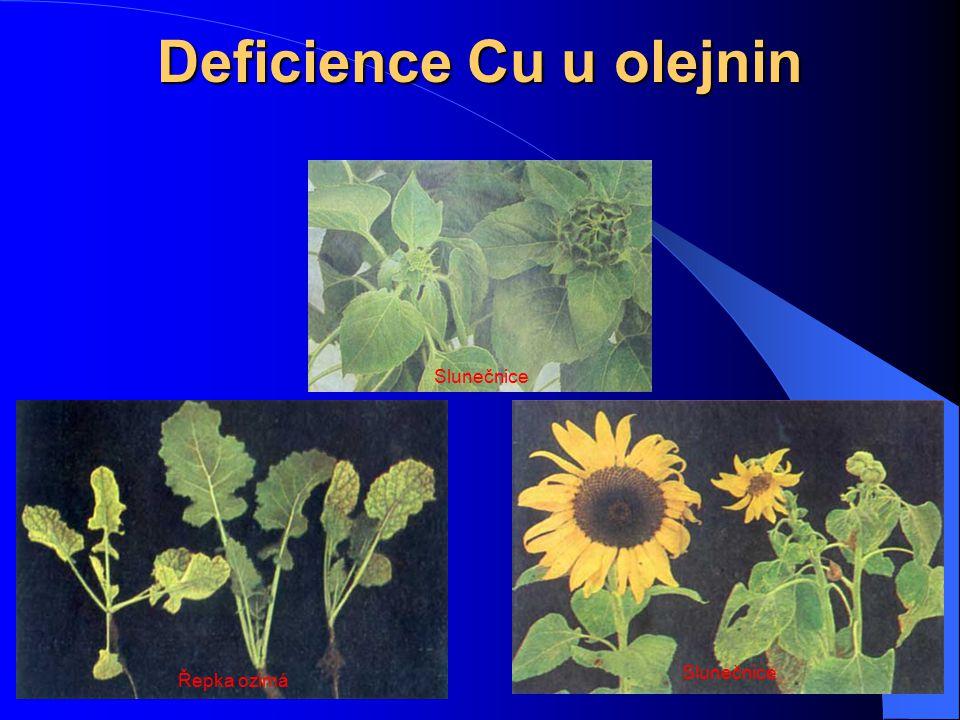 Deficience Cu u olejnin Řepka ozimá Slunečnice