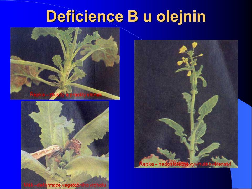 Deficience B u olejnin Řepka – ztlustlý a prasklý stonek Řepka – nedostatečně vyvinuté květenství Mák –deformace vegetačního vrcholu