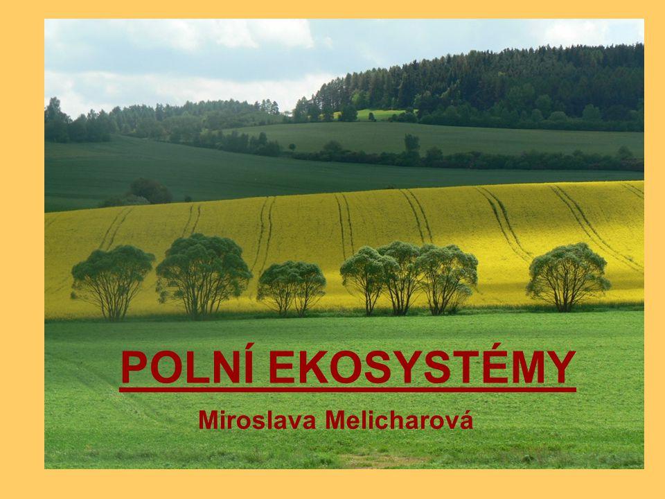 POLE je umělý ekosystém pěstují se zde hospodářsky důležité rostliny, které lidé využívají jako zdroj potravy a surovin pole je obvykle monokultura