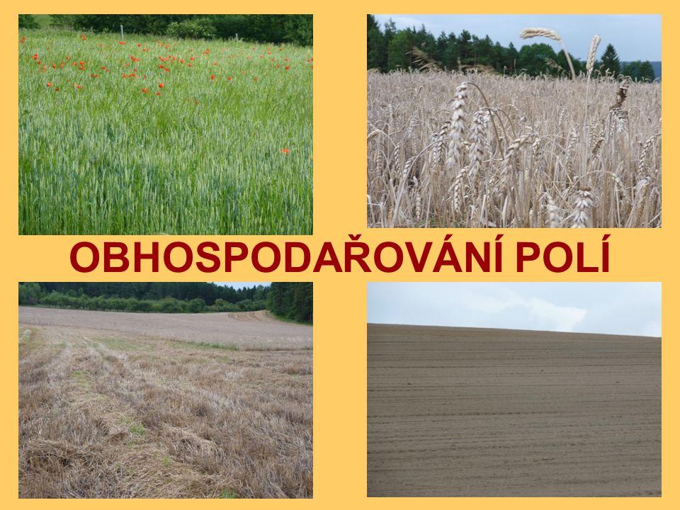po sklizni se půda provzdušňuje a hnojí (sběr kamenů) většina polí je přes zimu holá, na některých jsou ozimy (plodiny seté na podzim) na jaře se sejí nebo sází jařiny v průběhu růstu a zrání zemědělci podle potřeby zavlažují, hnojí a odstraňují škůdce po dozrání následuje sklizeň po sklizni se půda provzdušňuje a hnojí