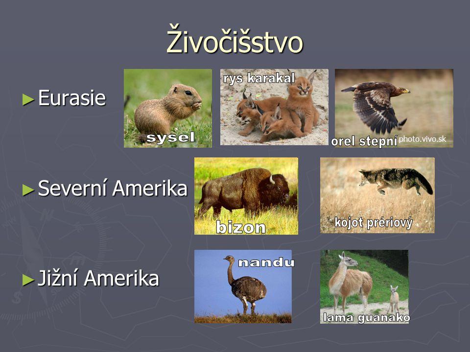 Živočišstvo ► Eurasie ► Severní Amerika ► Jižní Amerika photo.vivo.sk