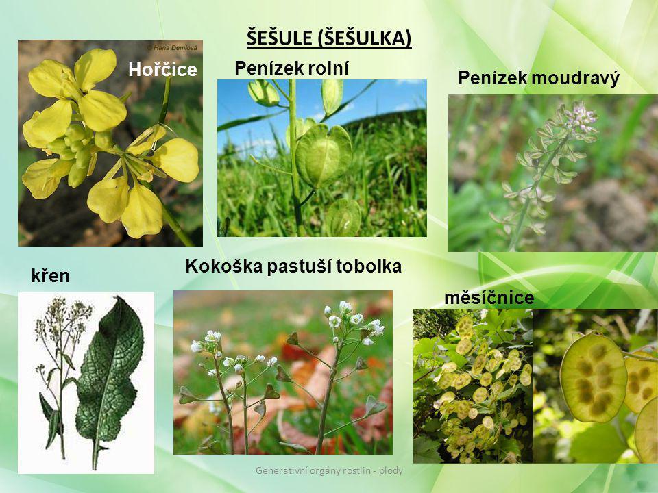 ŠEŠULE (ŠEŠULKA) Hořčice Penízek rolní Penízek moudravý Kokoška pastuší tobolka křen měsíčnice Generativní orgány rostlin - plody
