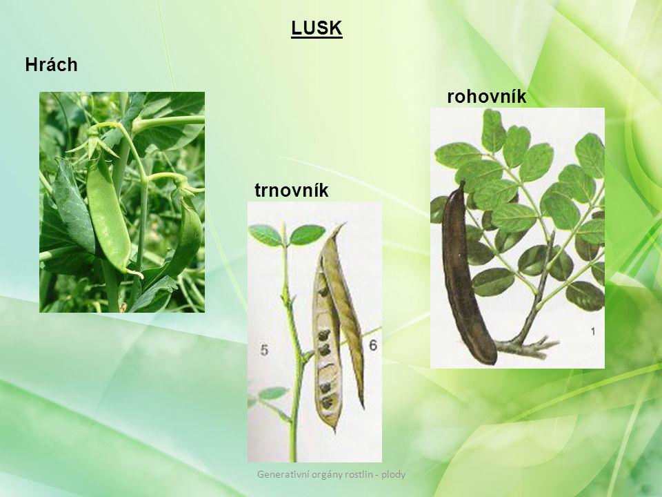 LUSK Hrách trnovník rohovník Generativní orgány rostlin - plody