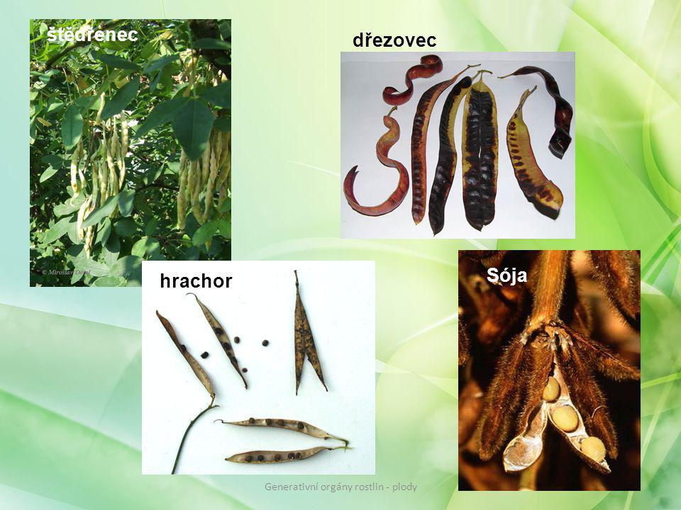 štědřenec dřezovec hrachor Sója Generativní orgány rostlin - plody