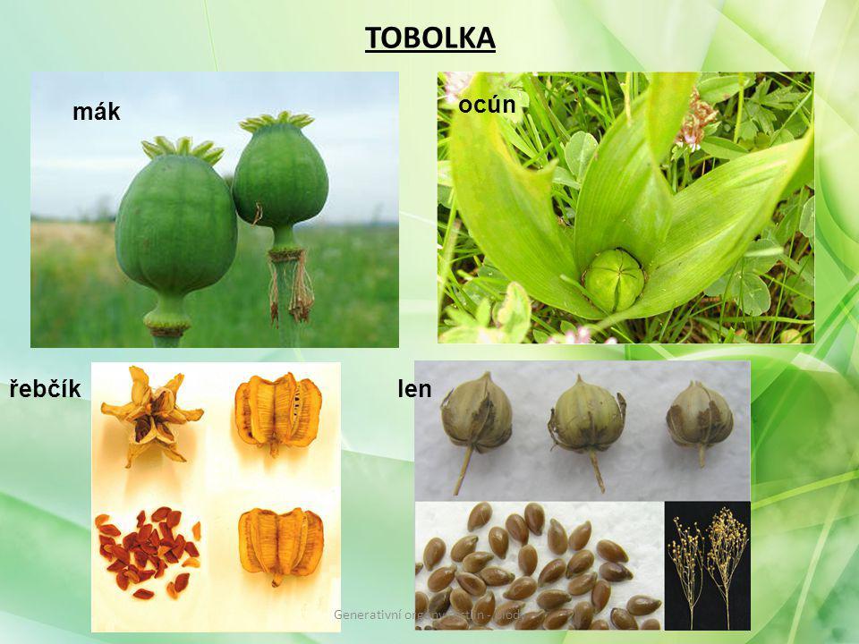 TOBOLKA mák ocún řebčíklen Generativní orgány rostlin - plody