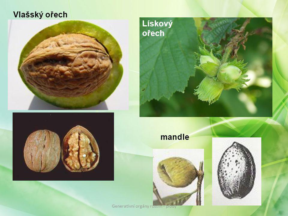 Vlašský ořech Lískový ořech mandle Generativní orgány rostlin - plody