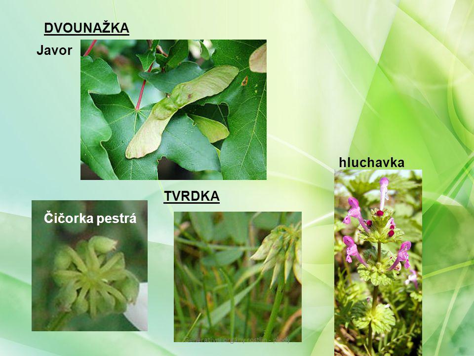 DVOUNAŽKA Javor TVRDKA Čičorka pestrá hluchavka Generativní orgány rostlin - plody