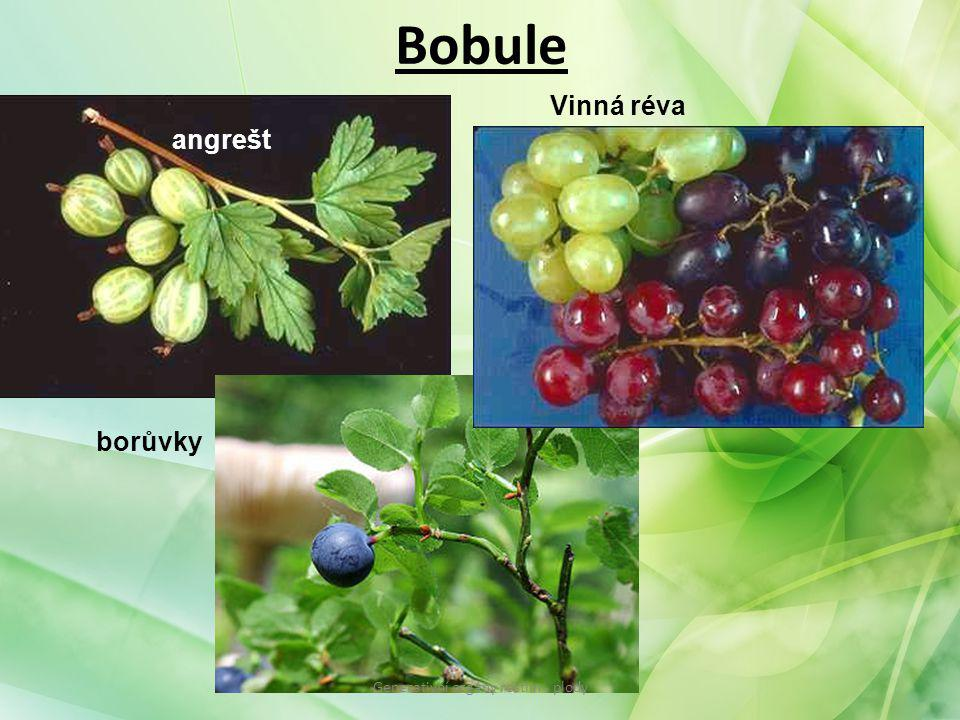 Bobule angrešt Vinná réva borůvky Generativní orgány rostlin - plody