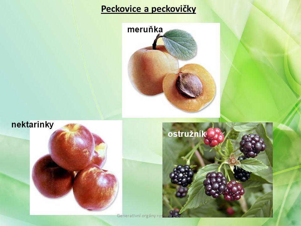 Peckovice a peckovičky meruňka nektarinky ostružník Generativní orgány rostlin - plody