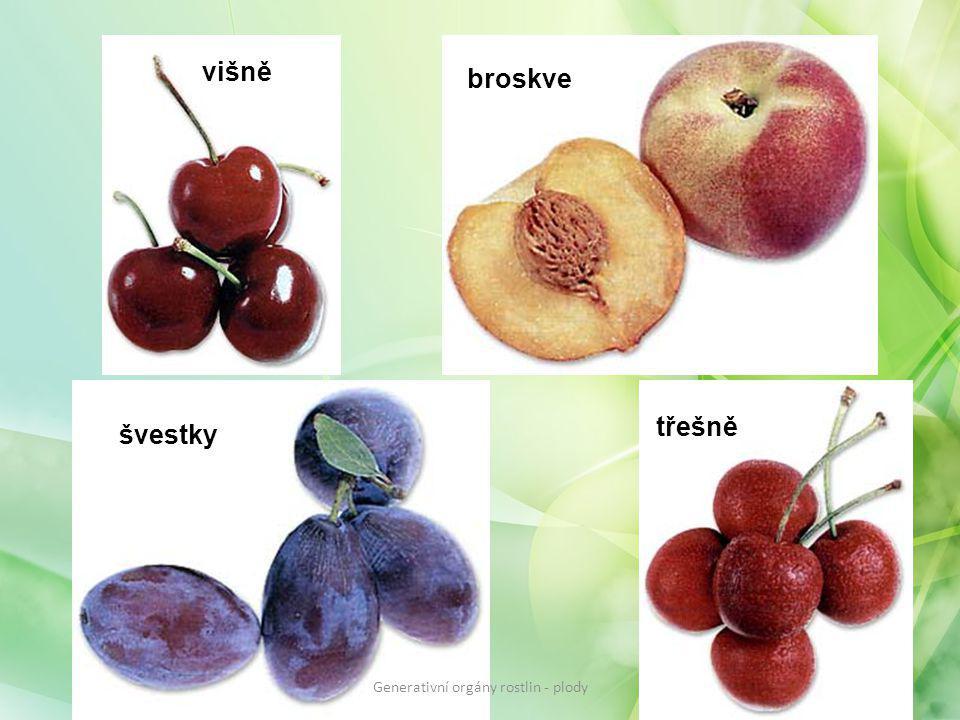 višně broskve švestky třešně Generativní orgány rostlin - plody