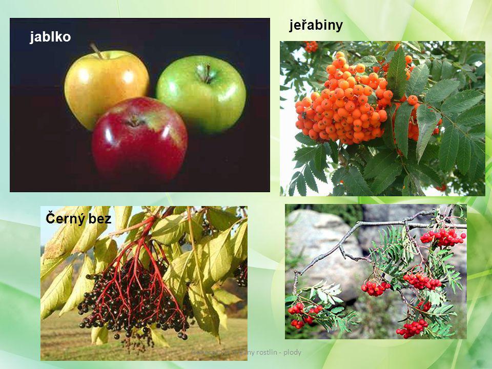 jablko jeřabiny Černý bez Generativní orgány rostlin - plody