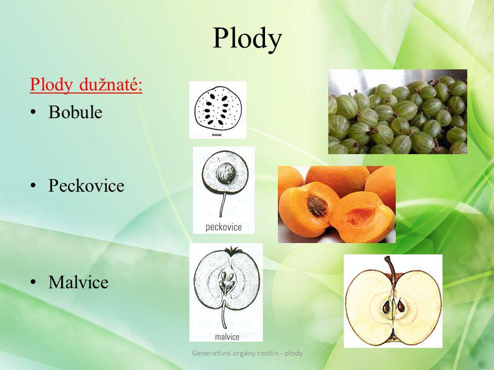 Plody Plody dužnaté: Bobule Peckovice Malvice Generativní orgány rostlin - plody