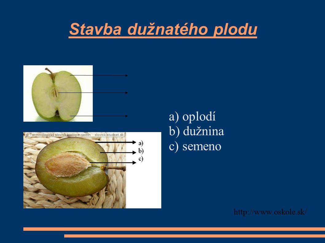 Stavba dužnatého plodu a) oplodí b) dužnina c) semeno http://www.oskole.sk/