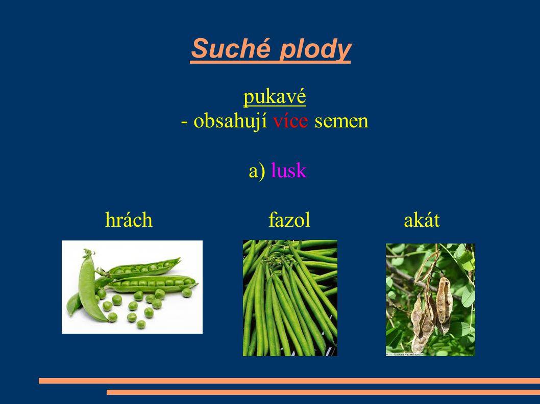 Suché plody pukavé - obsahují více semen a) lusk hrách fazol akát