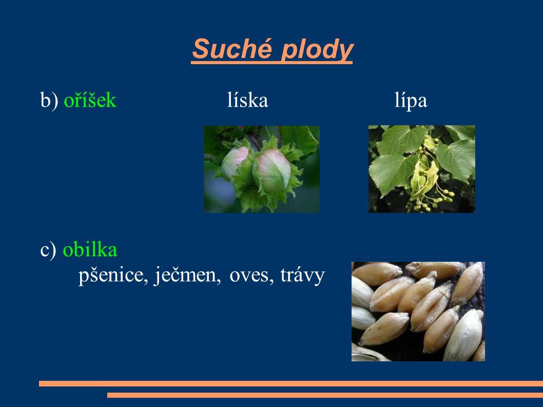 Suché plody b) oříšek líska lípa c) obilka pšenice, ječmen, oves, trávy