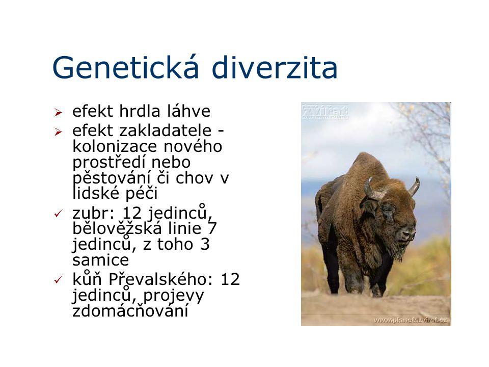 Genetická diverzita  efekt hrdla láhve  efekt zakladatele - kolonizace nového prostředí nebo pěstování či chov v lidské péči zubr: 12 jedinců, bělověžská linie 7 jedinců, z toho 3 samice kůň Převalského: 12 jedinců, projevy zdomácňování