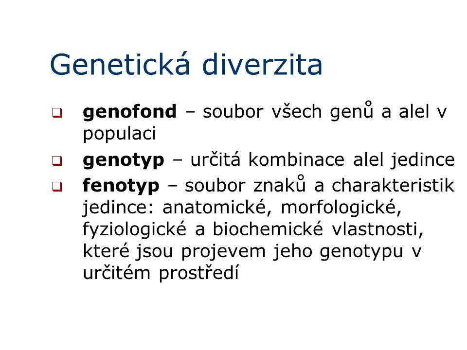 Genetická diverzita  genofond – soubor všech genů a alel v populaci  genotyp – určitá kombinace alel jedince  fenotyp – soubor znaků a charakteristik jedince: anatomické, morfologické, fyziologické a biochemické vlastnosti, které jsou projevem jeho genotypu v určitém prostředí