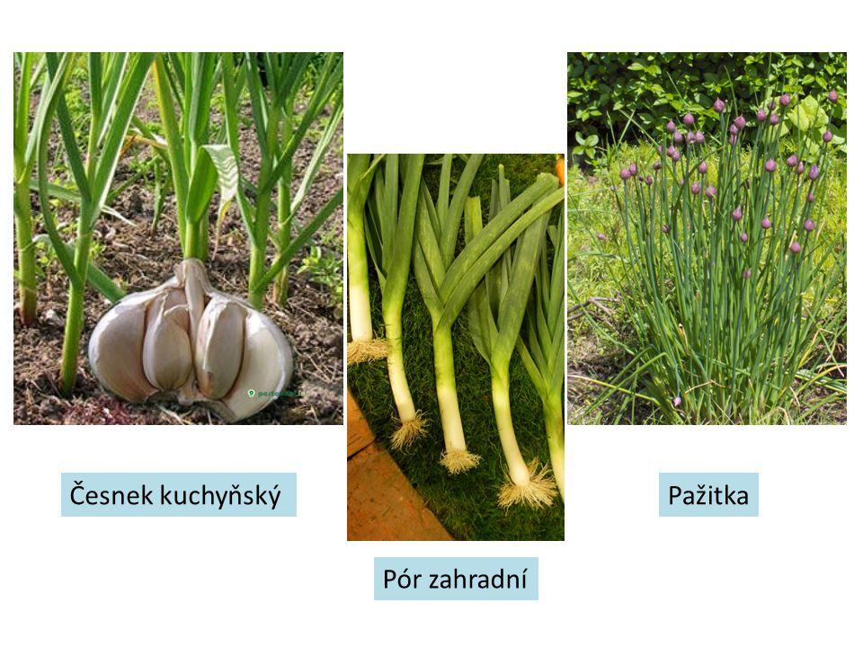 Česnek kuchyňský Pór zahradní Pažitka