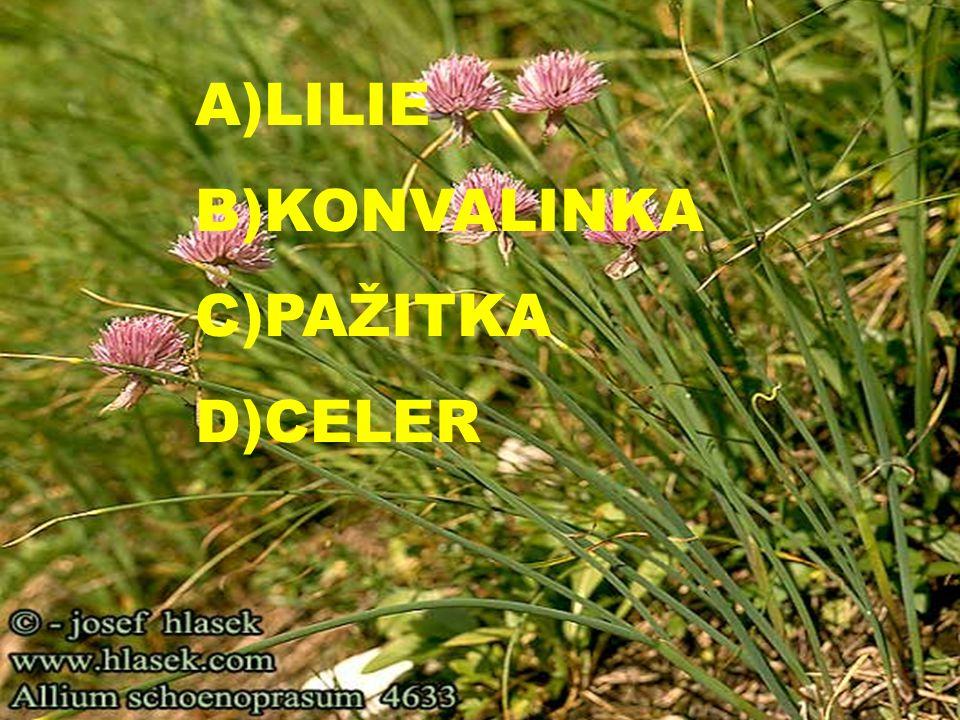 A)LILIE B)KONVALINKA C)PAŽITKA D)CELER