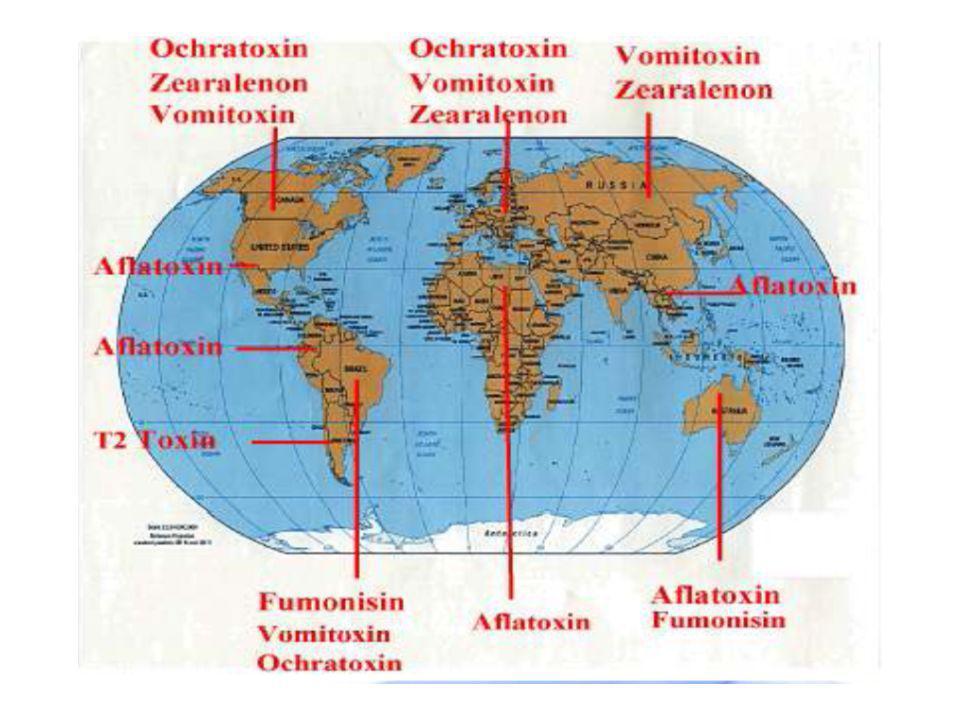 """Zearalenon (ZEN) toxin Fusarium graminearum a Fusarium sporotrichiodes kontaminant kukuřice, pšenice, ječmene, ovsa, čiroku a sena vysoká produkce toxinu při vysoké vlhkosti a nízké teplotě hyperestrogenní účinek  prasata nejvíce náchylná (účinky typicky při 1ppm v potravě, ojediněle i při 0,1 ppm), vliv na ovulaci a délku cyklu, samci vykazují symptomy """"feminizace – hypertrofie struků, atrofie varlat  u novorozených myších samic ZEN vyvolává trvalé poškození vaječníků Mechanismem účinku zejména vazba ZEN na cytosolický receptor 17  - estradiolu v děloze a vaječnících  afinita ZEN k danému receptoru je asi 0,1 afinity 17  - estradiolu  afinita stoupá v pořadí prase, potkan kuře"""