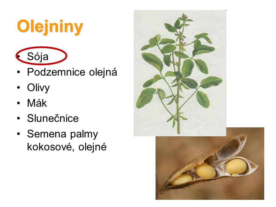 Olejniny Sója Podzemnice olejná Olivy Mák Slunečnice Semena palmy kokosové, olejné