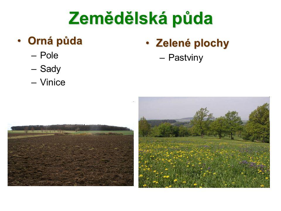 Zemědělská půda Orná půdaOrná půda –Pole –Sady –Vinice Zelené plochyZelené plochy –Pastviny