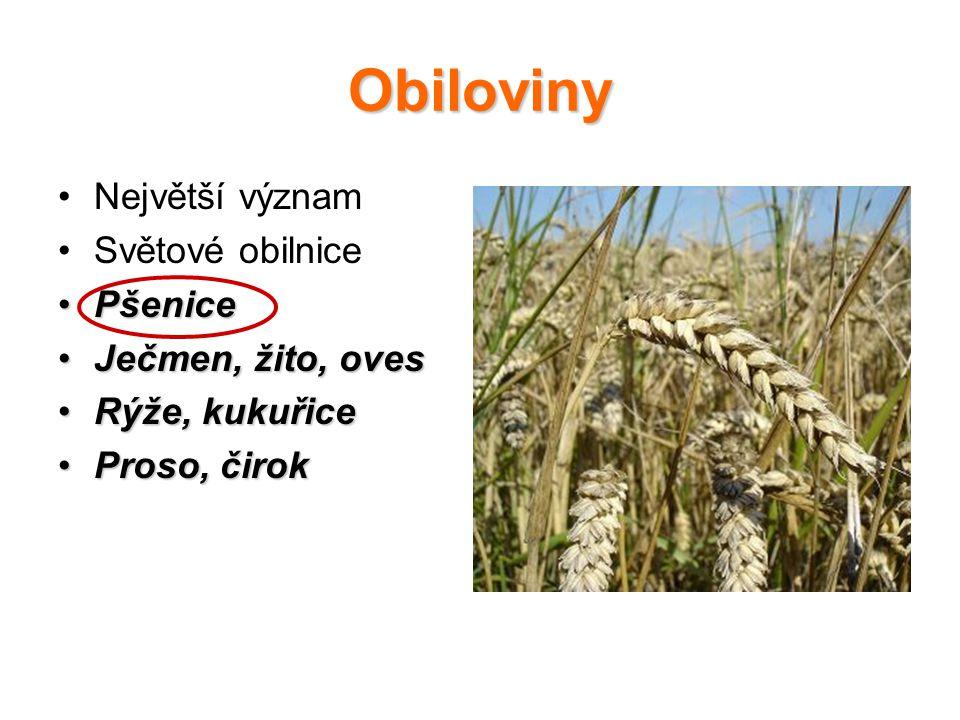 Obiloviny Největší význam Světové obilnice PšenicePšenice Ječmen, žito, ovesJečmen, žito, oves Rýže, kukuřiceRýže, kukuřice Proso, čirokProso, čirok