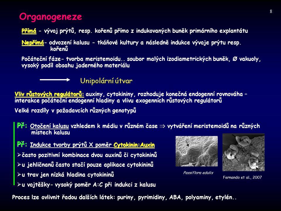 Organogeneze Přímá Přímá - vývoj prýtů, resp. kořenů přímo z indukovaných buněk primárního explantátu Nepřímá Nepřímá- odvození kalusu - tkáňové kultu