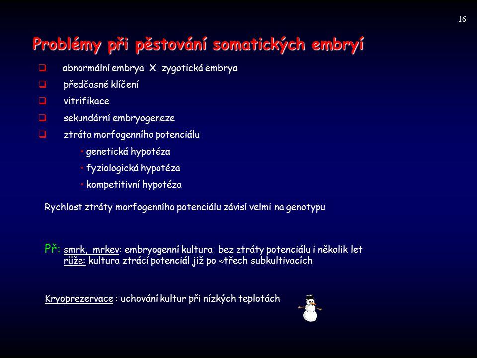 Problémy při pěstování somatických embryí  abnormální embrya X zygotická embrya  předčasné klíčení  vitrifikace  sekundární embryogeneze  ztráta