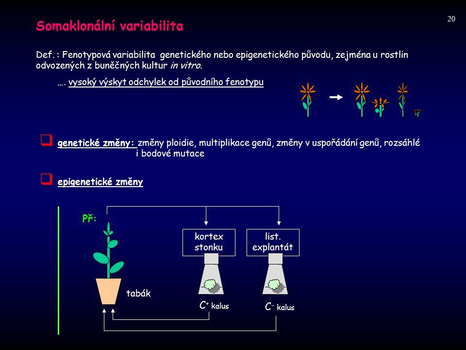 Somaklonální variabilita Def. : Fenotypová variabilita genetického nebo epigenetického původu, zejména u rostlin odvozených z buněčných kultur in vitr
