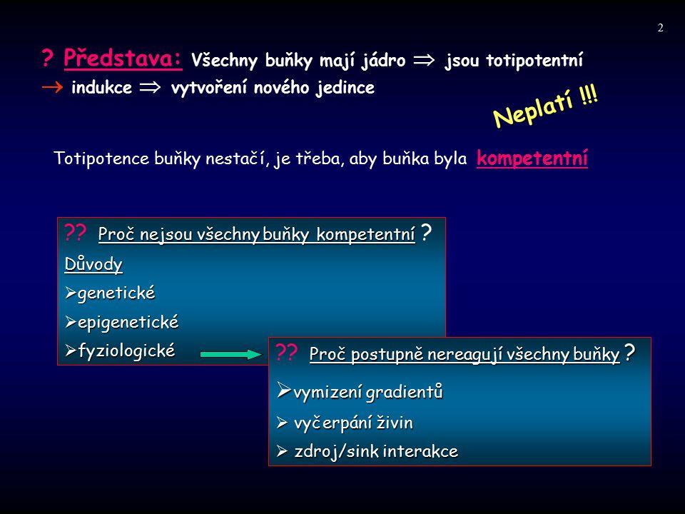 ? Představa: Všechny buňky mají jádro  jsou totipotentní  indukce  vytvoření nového jedince Neplatí !!! Totipotence buňky nestačí, je třeba, aby bu
