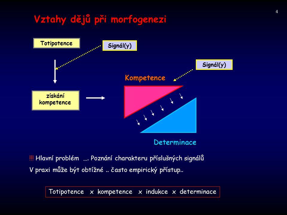 Vztahy dějů při morfogenezi Signál(y) získání kompetence Determinace Kompetence !!! Hlavní problém …. Poznání charakteru příslušných signálů V praxi m
