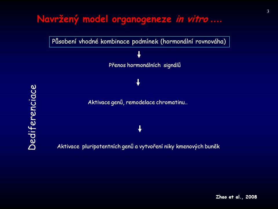Navržený model organogeneze in vitro …. Dediferenciace Působení vhodné kombinace podmínek (hormonální rovnováha) Přenos hormonálních signálů Aktivace