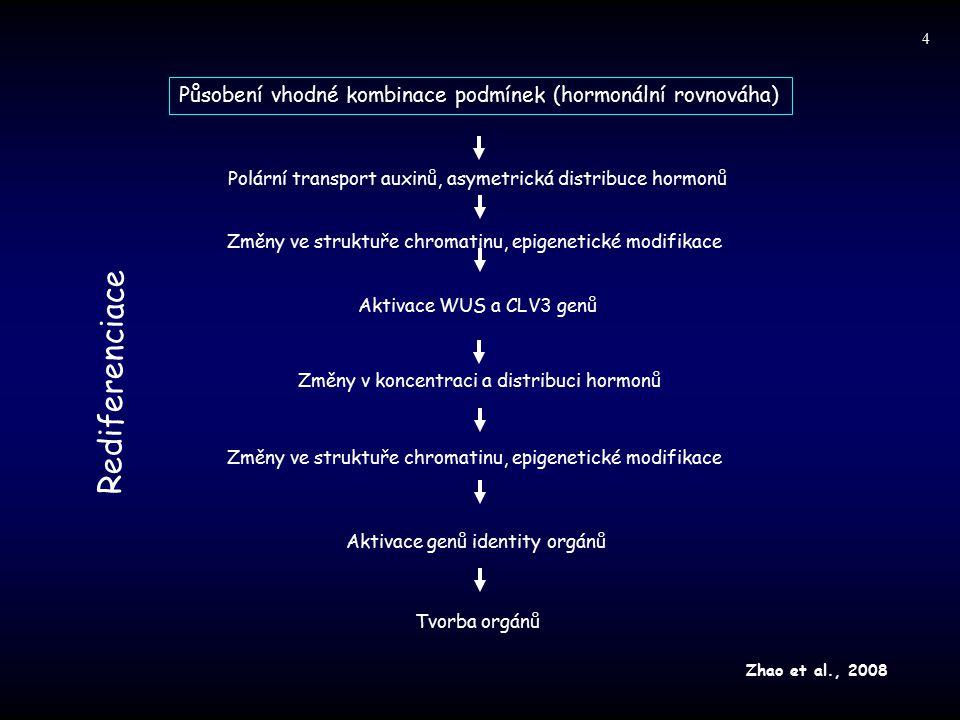 Změny ve struktuře chromatinu, epigenetické modifikace Polární transport auxinů, asymetrická distribuce hormonů Rediferenciace Působení vhodné kombina