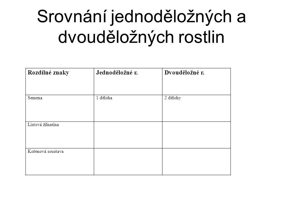 Srovnání jednoděložných a dvouděložných rostlin Rozdílné znakyJednoděložné r.Dvouděložné r.