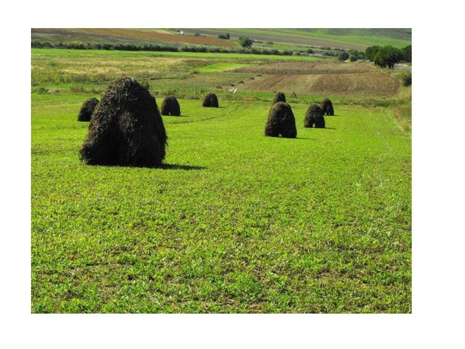 Pastviny jsou určené pro spásání dobytkem.