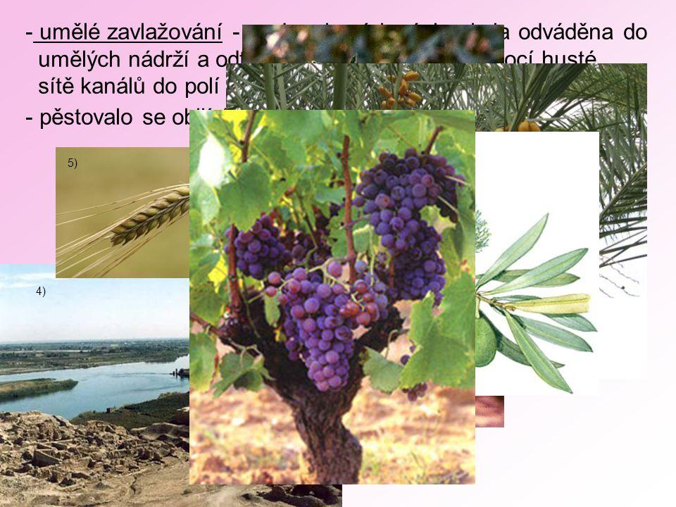 4) - umělé zavlažování - voda z jarních záplav byla odváděna do umělých nádrží a odtud pak v době sucha pomocí husté sítě kanálů do polí - pěstovalo se obilí (ječmen), sezam, datle, olivy, vinná réva 5) 6) 7) 8) 9)