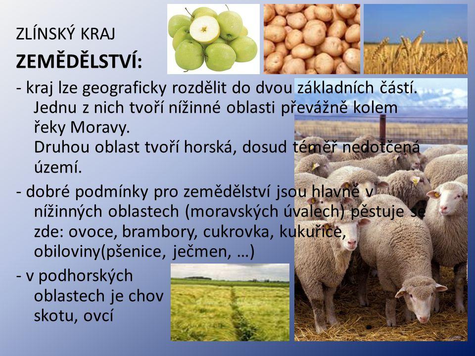 ZLÍNSKÝ KRAJ ZEMĚDĚLSTVÍ: - kraj lze geograficky rozdělit do dvou základních částí. Jednu z nich tvoří nížinné oblasti převážně kolem řeky Moravy. Dru