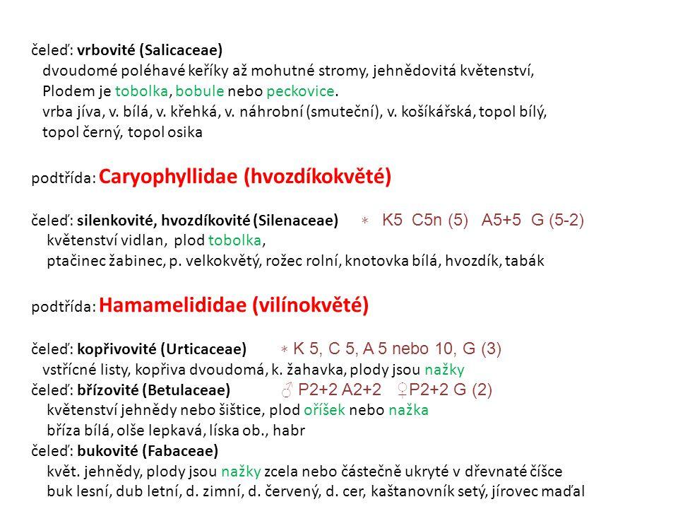 čeleď: vrbovité (Salicaceae) dvoudomé poléhavé keříky až mohutné stromy, jehnědovitá květenství, Plodem je tobolka, bobule nebo peckovice.