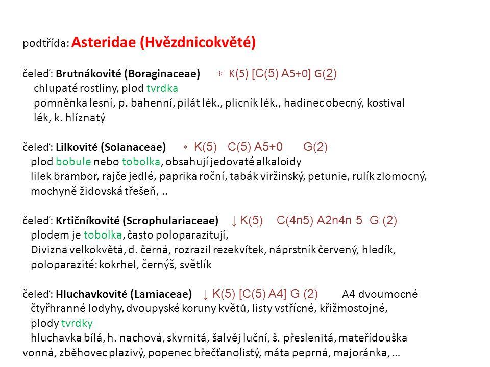 podtřída: Asteridae (Hvězdnicokvěté) čeleď: Brutnákovité (Boraginaceae) ∗ K(5) [C(5) A 5+0 ] G (2) chlupaté rostliny, plod tvrdka pomněnka lesní, p.