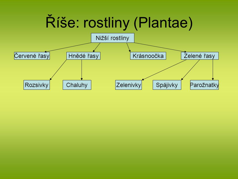 Říše: rostliny (Plantae) Nižší rostliny Červené řasyHnědé řasyKrásnoočkaZelené řasy RozsivkyChaluhyZelenivkySpájivkyParožnatky