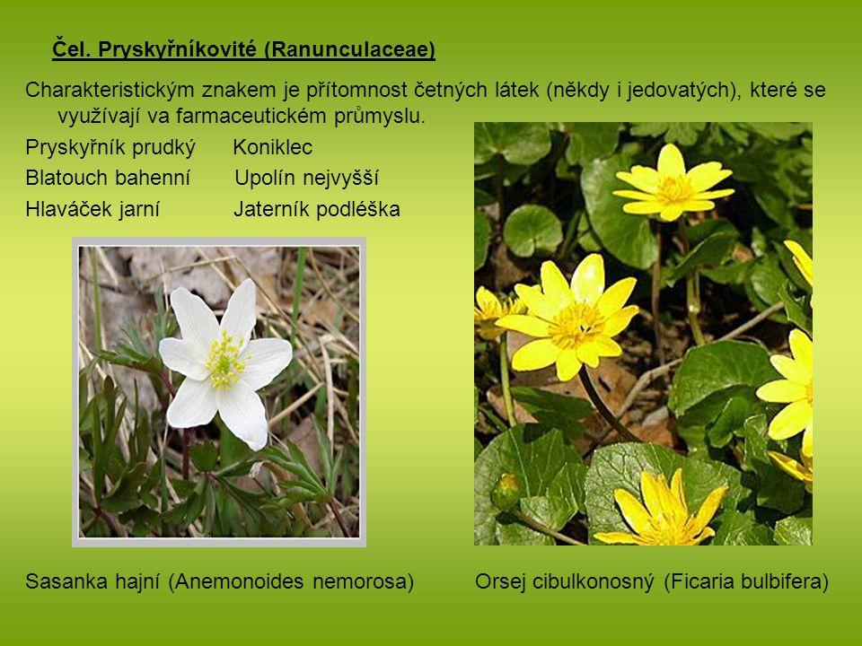 Čel. Pryskyřníkovité (Ranunculaceae) Charakteristickým znakem je přítomnost četných látek (někdy i jedovatých), které se využívají va farmaceutickém p