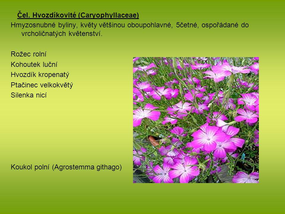 Čel. Hvozdíkovité (Caryophyllaceae) Hmyzosnubné byliny, květy většinou oboupohlavné, 5četné, ospořádané do vrcholičnatých květenství. Rožec rolní Koho