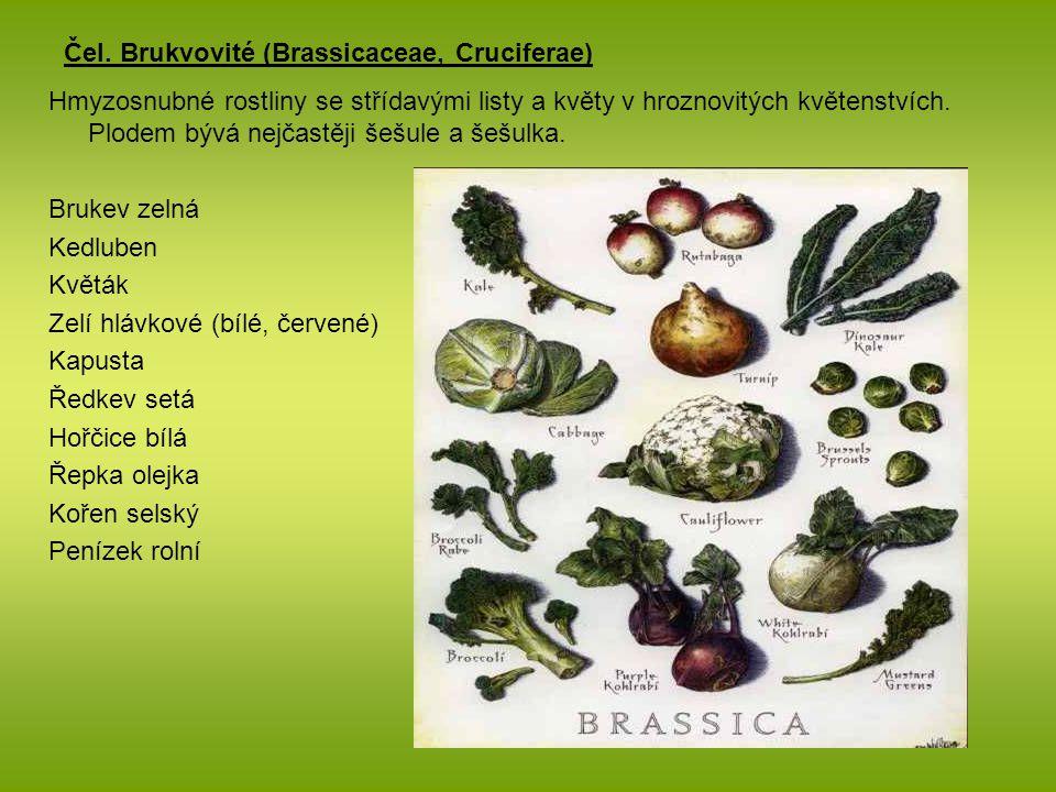 Čel. Brukvovité (Brassicaceae, Cruciferae) Hmyzosnubné rostliny se střídavými listy a květy v hroznovitých květenstvích. Plodem bývá nejčastěji šešule