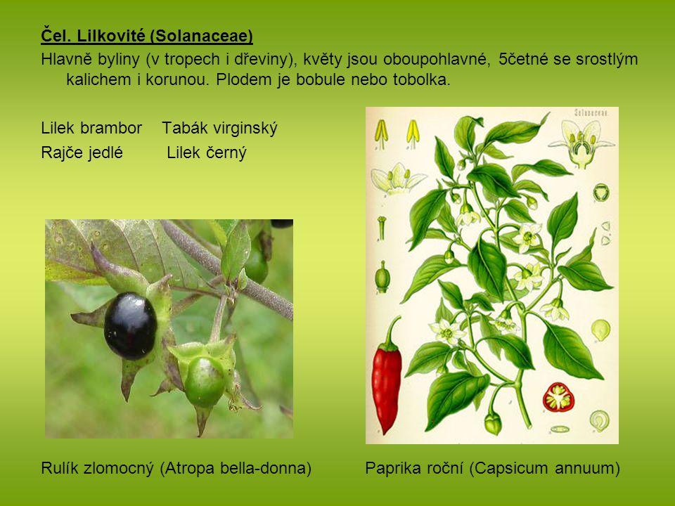Čel. Lilkovité (Solanaceae) Hlavně byliny (v tropech i dřeviny), květy jsou oboupohlavné, 5četné se srostlým kalichem i korunou. Plodem je bobule nebo