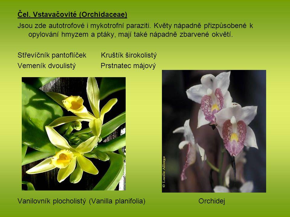 Čel. Vstavačovité (Orchidaceae) Jsou zde autotrofové i mykotrofní paraziti. Květy nápadně přizpůsobené k opylování hmyzem a ptáky, mají také nápadně z