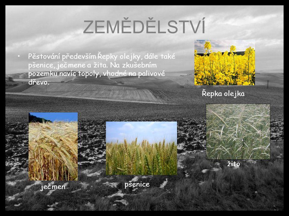 ZEMĚDĚLSTVÍ Pěstování především Řepky olejky, dále také pšenice, ječmene a žita. Na zkušebním pozemku navíc topoly, vhodné na palivové dřevo. Řepka ol
