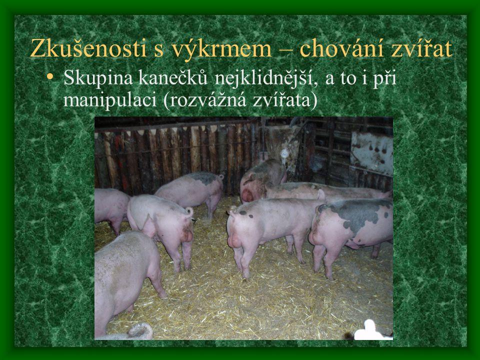 Zkušenosti s výkrmem – chování zvířat Skupina kanečků nejklidnější, a to i při manipulaci (rozvážná zvířata)