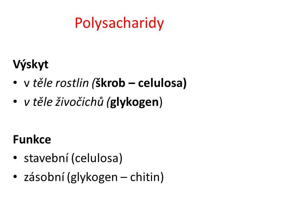 Polysacharidy Výskyt v těle rostlin (škrob – celulosa) v těle živočichů (glykogen) Funkce stavební (celulosa) zásobní (glykogen – chitin)